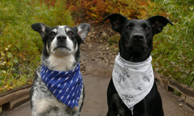 Our Favorite Dog Bandanas and How to Style Them